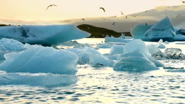 isberg och säl flyter i ice lagoon jokulsarlon glacier lagoon på island - polarklimat bildbanksvideor och videomaterial från bakom kulisserna