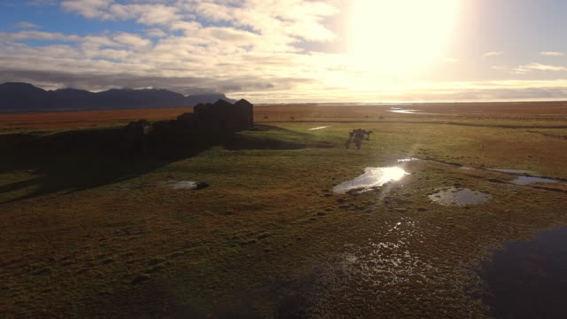 AERIAL Icelandic horses on the pasture video