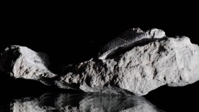 Ichthyosaur bone turning on black Ichthyosaur bone, found at the Jurassic Coast in England, turning on black background. animal skeleton stock videos & royalty-free footage