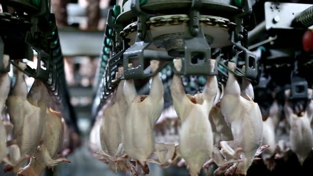icken kött produktionslinje. livsmedelsindustrin. - livsmedelstillverkningsfabrik bildbanksvideor och videomaterial från bakom kulisserna