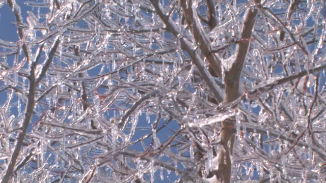Icy Branch #3 HD video