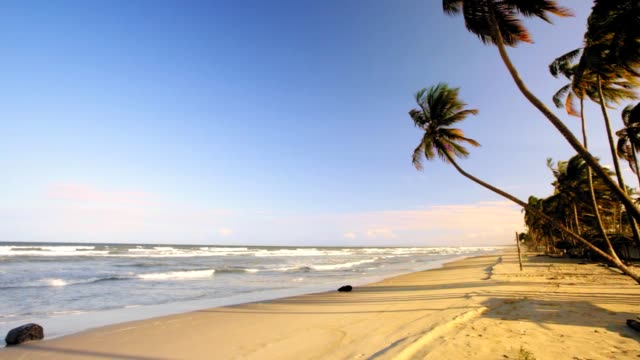 idylic tropical caribbean island beach with coconut trees, sand and waves at sunset time - palm tree filmów i materiałów b-roll