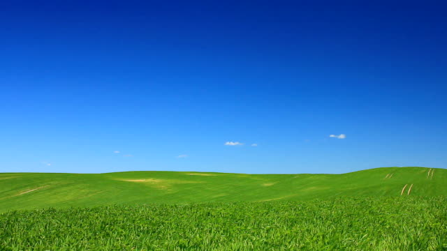 Idyll - green field and the blue sky video
