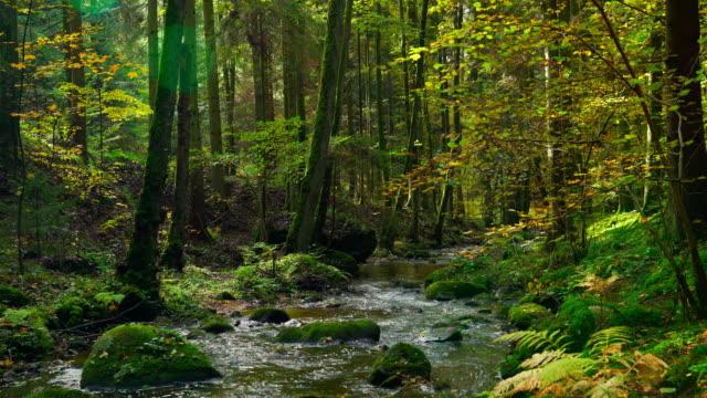 Idyllic Autumn Forest With Stream – film
