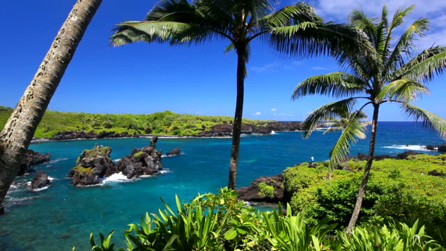 idyllic bay with palm tree and blue ocean, maui, hawaii video