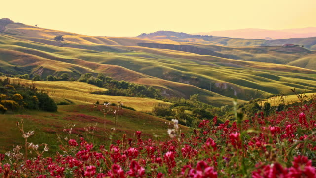 slo mo idylliska landsbygden i toscana - vild blomma bildbanksvideor och videomaterial från bakom kulisserna