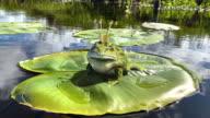 istock idyllic Irish river scene with frog prince 1227168996