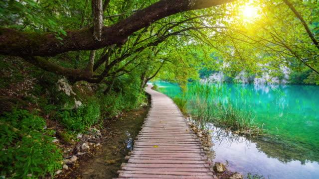 steadycam: idyllic lake landscape in plitvice national park, croatia - национальный парк плитвицкие озёра стоковые видео и кадры b-roll