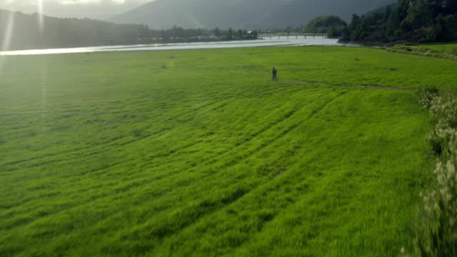 idyllisk bergslandskap. drone synvinkel - single pampas grass bildbanksvideor och videomaterial från bakom kulisserna