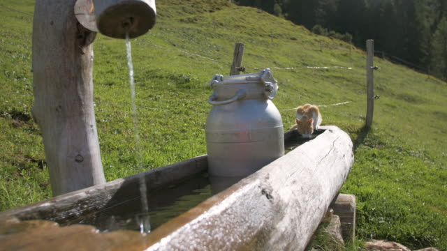 idyllic mountain scenery with a cute cat - кошка смешанной породы стоковые видео и кадры b-roll