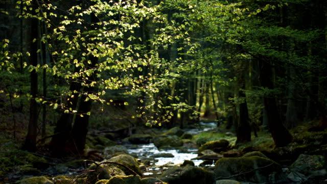 Idyllischer Bach fließt im Frühlingswald – Video