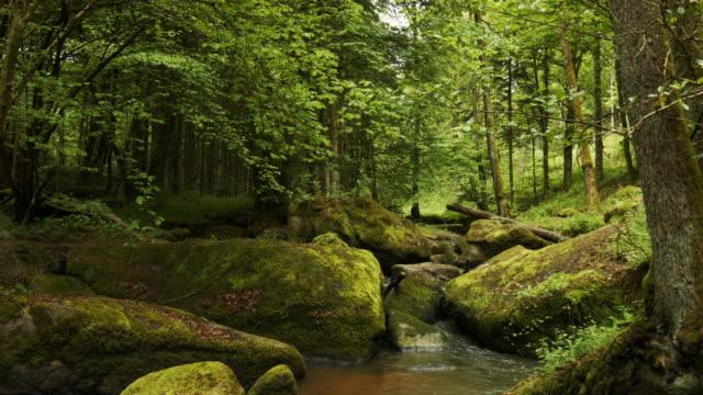 Idyllischer Bach fließt in sttony Forest – Video