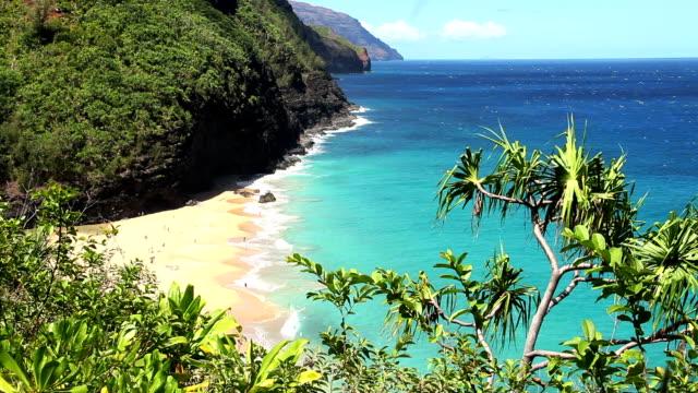 Idyllic Tropical Beach video