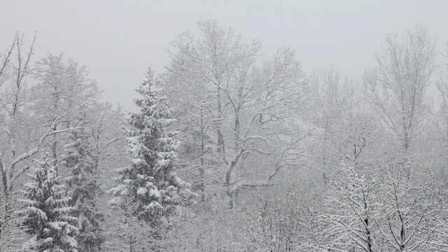 HD: Idyllic winter time with snow falling video