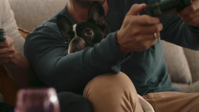 ignorera hus djur - working from home bildbanksvideor och videomaterial från bakom kulisserna