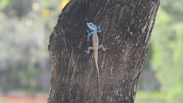 stockvideo's en b-roll-footage met leguaan zittend op een boom - {{asset.href}}