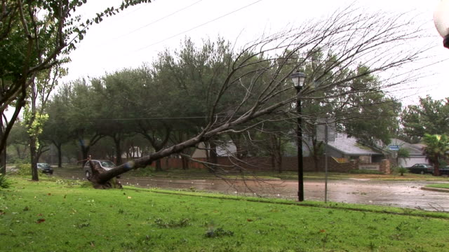 Ike Tree Down Cars video