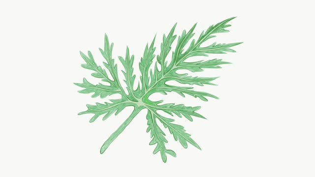 Illustration Footage of Fresh Green Lacy Tree Philodendron Plant