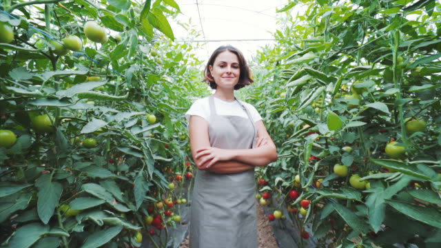 Im proud of my business. Young woman farmer standing in the greenhouse and looking at camera with confidence. She has a new business and enjoying it. bolos stock videos & royalty-free footage