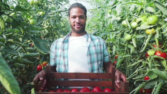私は新鮮で有機トマトを提供する準備ができています。 - 籠点の映像素材/bロール