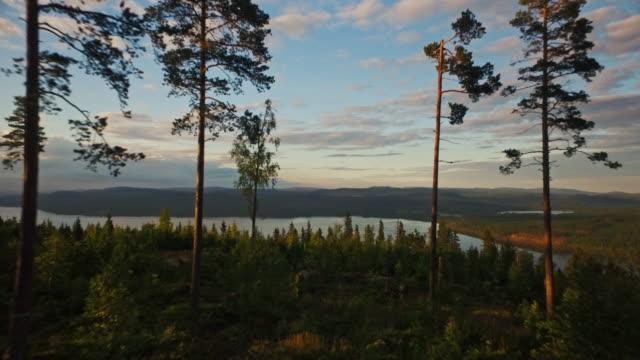 flygbild i skog - fur bildbanksvideor och videomaterial från bakom kulisserna