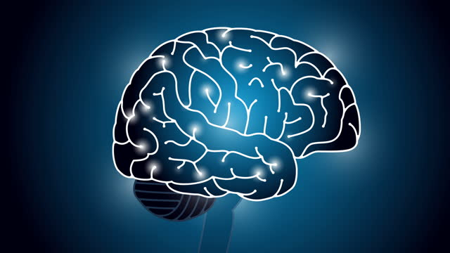 Image of brain and pulse Illustration video material Image of brain and pulse Illustration video material part of stock videos & royalty-free footage