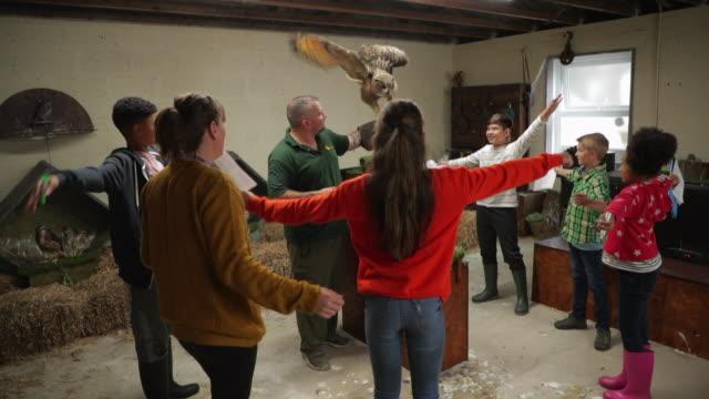 imitating the eagle owl - viaggio d'istruzione video stock e b–roll