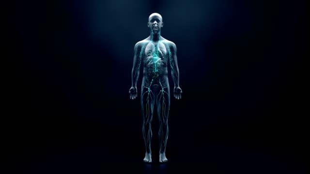 vídeos de stock, filmes e b-roll de sistema imunológico defende o corpo contra infecções e doenças - estrutura física