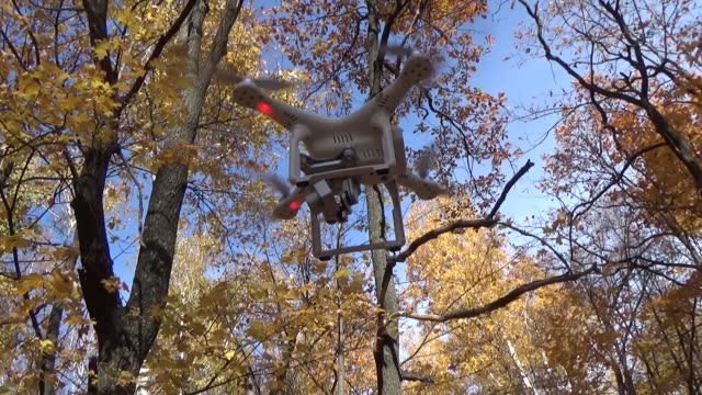 Impact quadrocopter screw on a tree