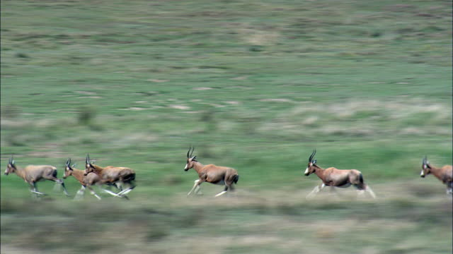 Impala only - Aerial View - Orange Free State,  South Africa video