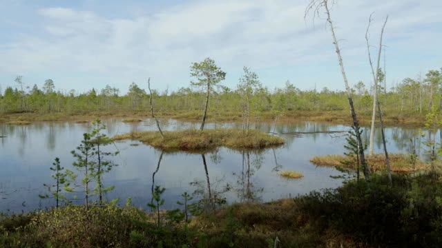 Impenetrable swamp in the Siberia video