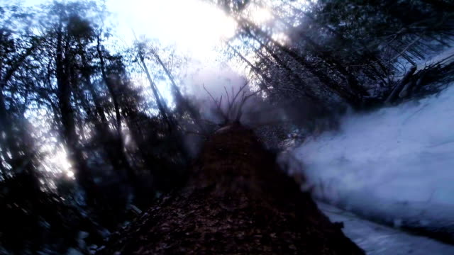 Impressive Slow Motion of a Tree Falling down