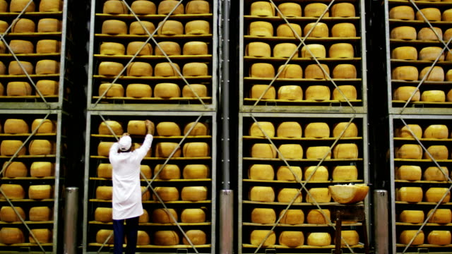in a cheese industry, a master cheese maker mixes the milk and the curd to make a form of parmesan:the cheese maker does it according to the old italian tradition. - stan naturalny filmów i materiałów b-roll