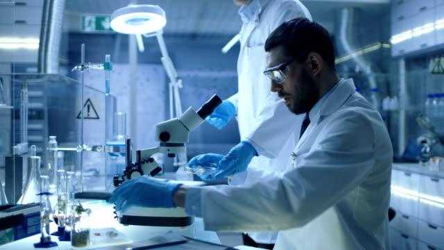 現代研究室アシスタントをもたらすペトリ皿主任研究員に人は特定のサンプルの下で顕微鏡検査を開始します。 - 研究所点の映像素材/bロール