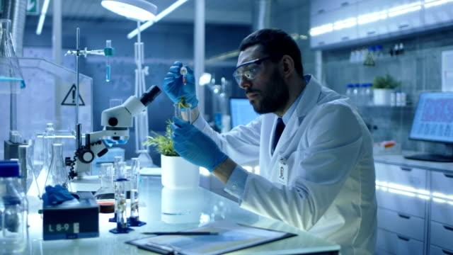 有機材料を用いた近代的な研究室研究科学者実施実験に。彼はそれで植物を試験管に肥料をドロップするピペットを使用します。 ビデオ