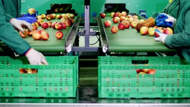 in einer apfel-verarbeitung-fabrik sortieren arbeiter in handschuhen äpfel. die reifen äpfel sortierung nach größe und farbe, dann verpacken. industrielle produktionsanlagen in der lebensmittelindustrie. nahaufnahme - apple stock-videos und b-roll-filmmaterial