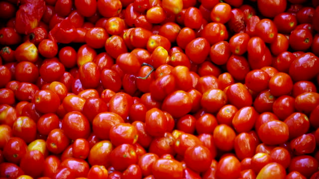 in an industry tomatoes, red tomatoes pass into tanks filled with water to be washed from earth and debris and exit perfectly clean. - pomodoro video stock e b–roll