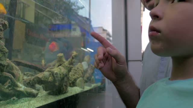 In city of Thessaloniki Greece father and son looking at aquarium with fish video