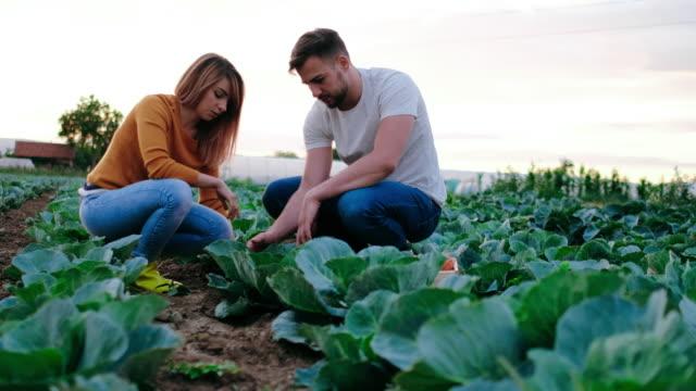 In gardening business video