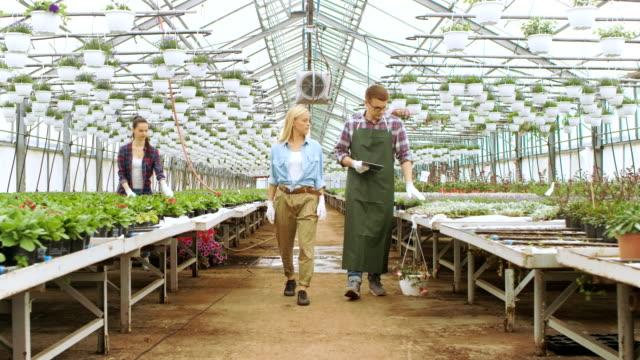 Em estufa Industrial ensolarada jardineiro e engenheiro agrônomo inspecionam as flores e plantas em analisar dados com computador Tablet. Linhas de raras e comercialmente viáveis de plantas são visíveis. - vídeo