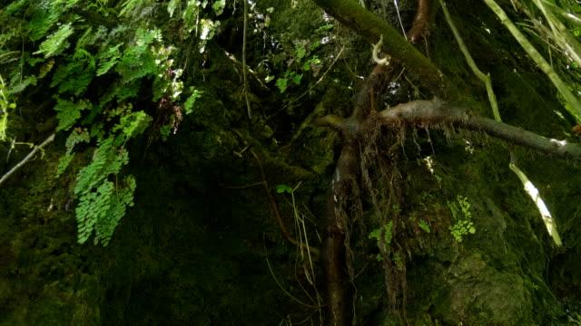 in den dunklen dickicht des feuchten regenwaldes fließen wassertropfen über das gras - baumgruppe stock-videos und b-roll-filmmaterial