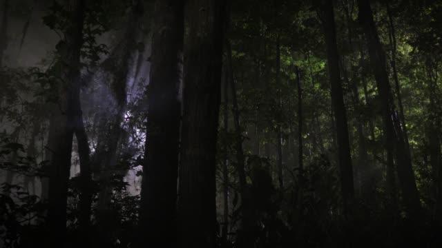 ufo i skogen - liten skog bildbanksvideor och videomaterial från bakom kulisserna