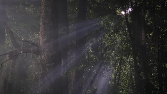 ufo in the forest - хвойное дерево стоковые видео и кадры b-roll