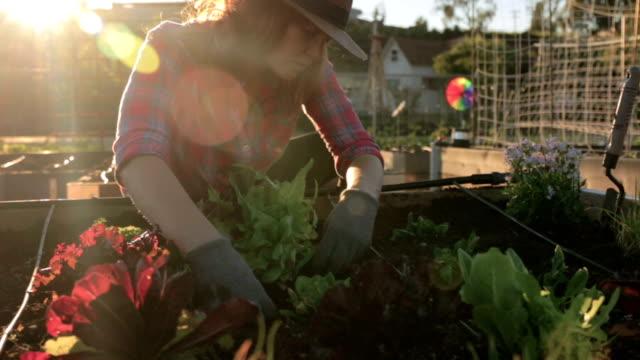 vídeos y material grabado en eventos de stock de en el jardín - huerto