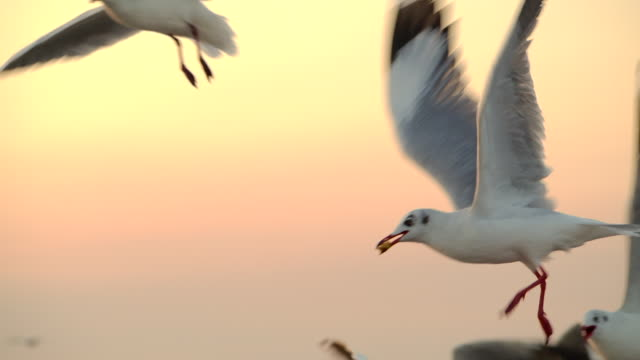 4k in the morning, the sunrise on the beach, many seagulls flew. - uccello acquatico video stock e b–roll