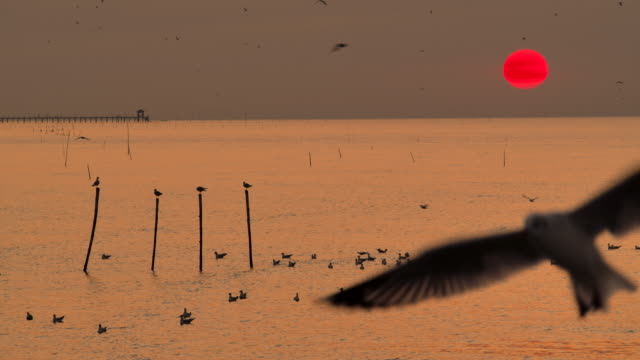 4K In the morning, the sunrise on the beach, many seagulls flew.