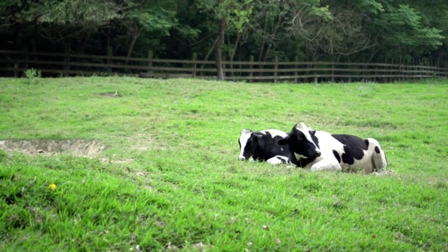 50 Lazy Farmer Stock Videos And Royalty Free Footage Istock