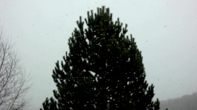 in the window snow falls video