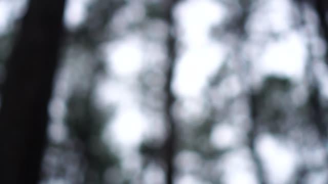 in den winterwald. hintergrund verschwimmen. - landscape crazy stock-videos und b-roll-filmmaterial