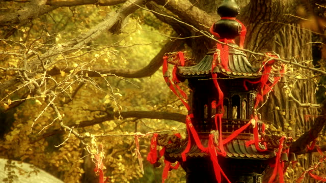 incense burner and ginkgo tree in wind。 video